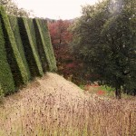 yew hedges and meadow at perrycroft garden